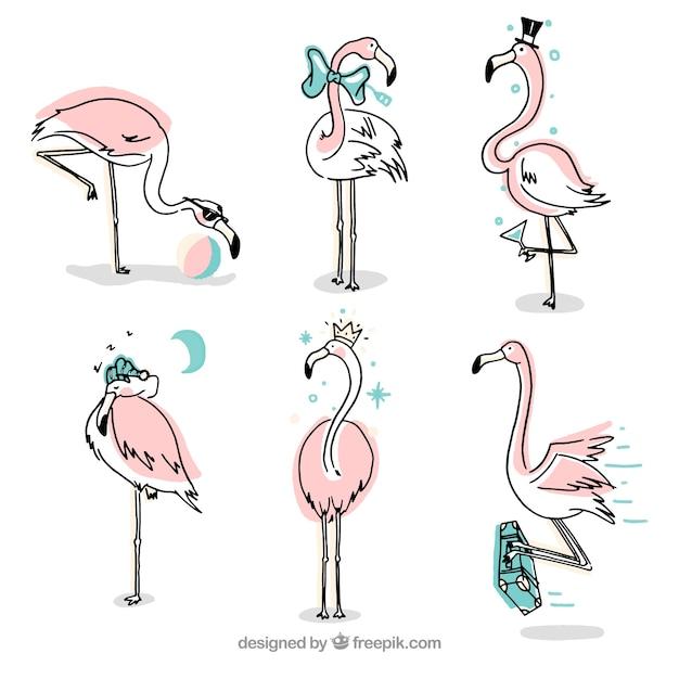 Set van roze flamingo's met verschillende houdingen Gratis Vector