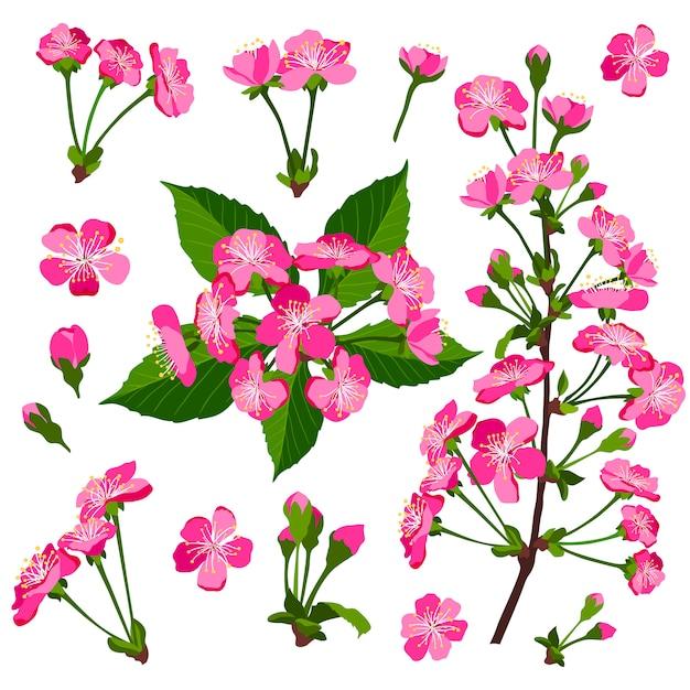 Set van roze kersenboom bloemen Premium Vector