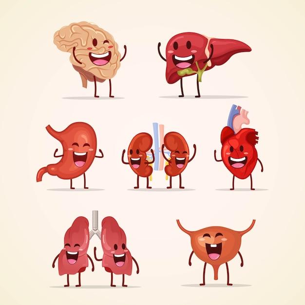 Set van schattige karakter menselijke interne organen Premium Vector
