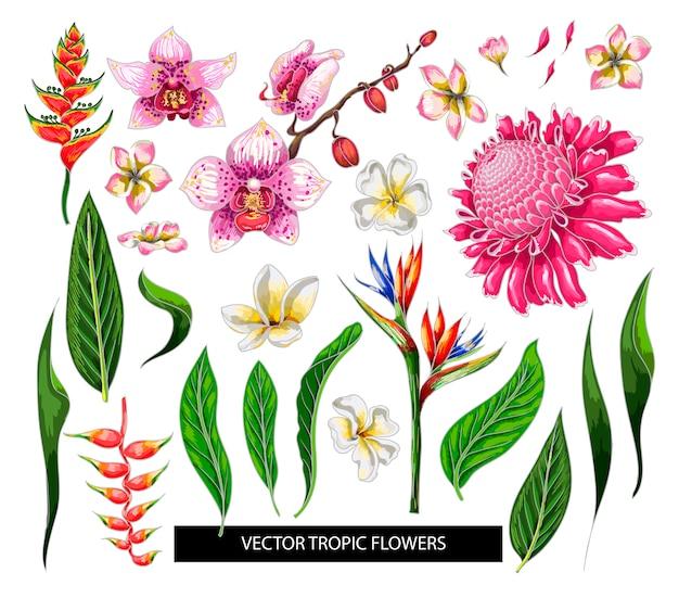 Set van tropische bloemen. ontwerp geïsoleerde elementen. Premium Vector