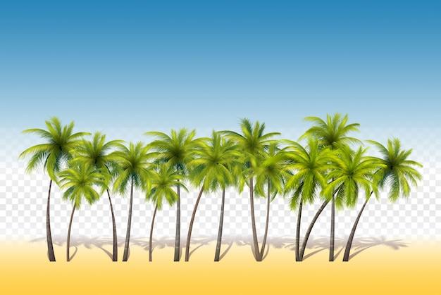 Set van tropische palmen Premium Vector
