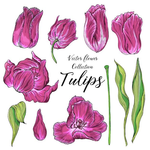 Set van vector gekleurde tulp bloemen, lentebloemen Premium Vector