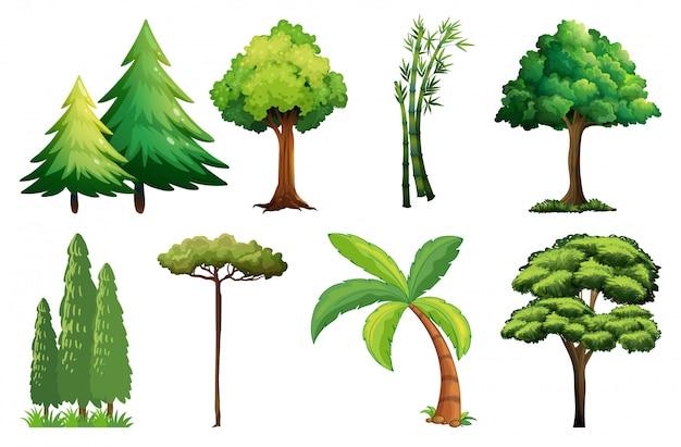 Set van verschillende boom Gratis Vector