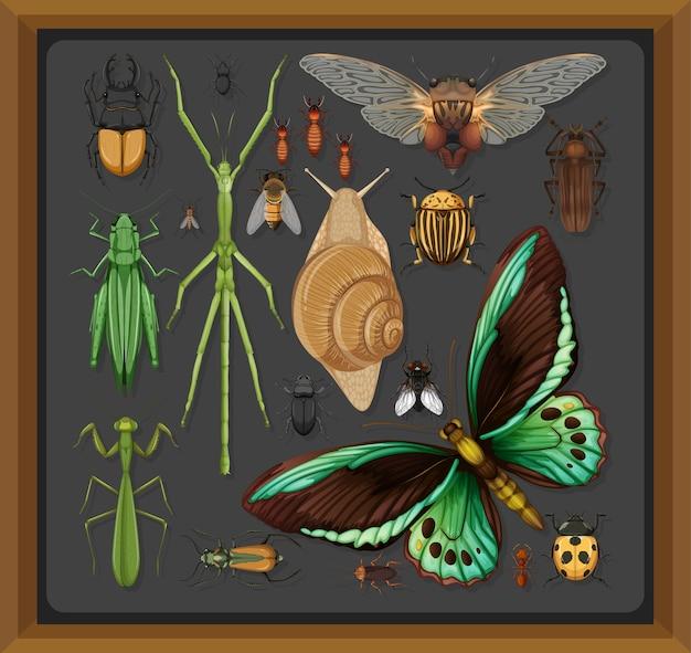 Set van verschillende insecten in houten frame Gratis Vector
