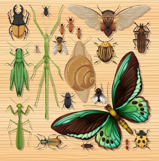 Set van verschillende insecten op houten wallpaper achtergrond Gratis Vector