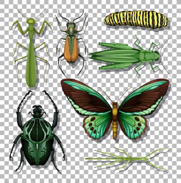 Set van verschillende insecten op transparante achtergrond Gratis Vector