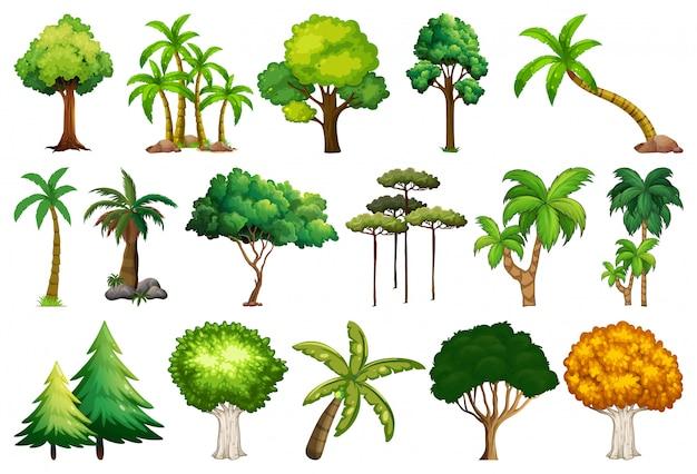 Set van verschillende planten en bomen Gratis Vector
