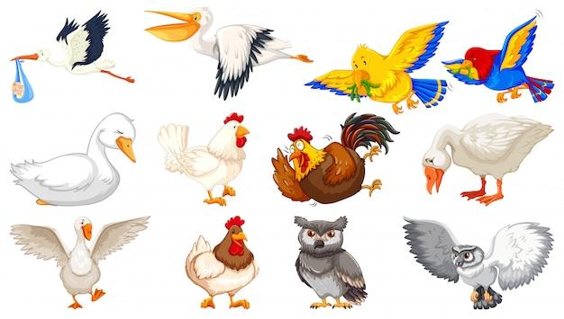 Set van verschillende vogels cartoon stijl geïsoleerd op een witte achtergrond Gratis Vector