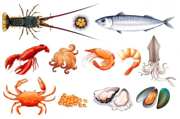 Set van verse zeevruchten Premium Vector