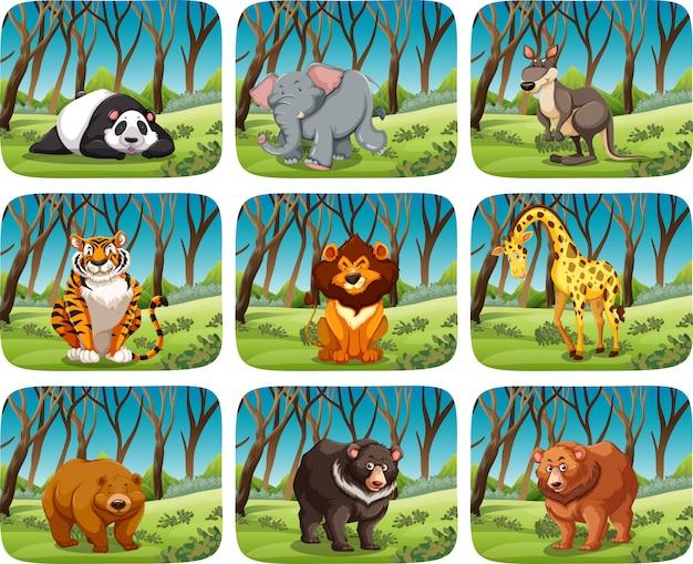 Set van wilde dieren in het bos Premium Vector