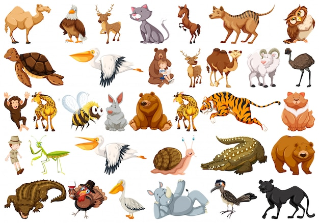 Set van wilde dieren Gratis Vector
