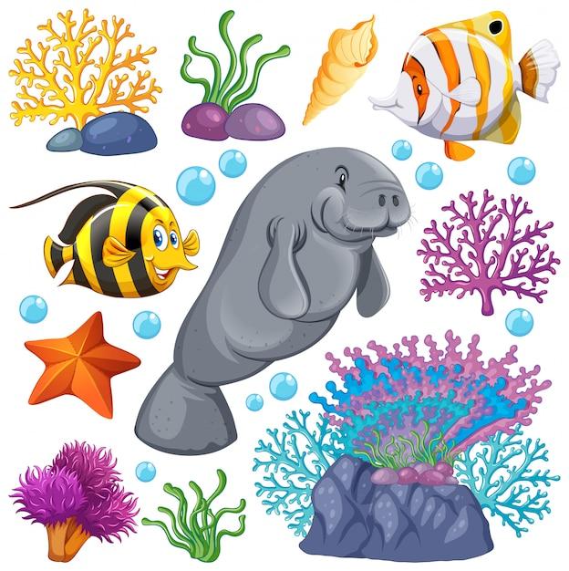 Set van zeedieren en koraal op witte achtergrond Gratis Vector