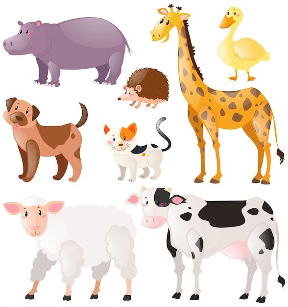 Set wilde dieren Gratis Vector