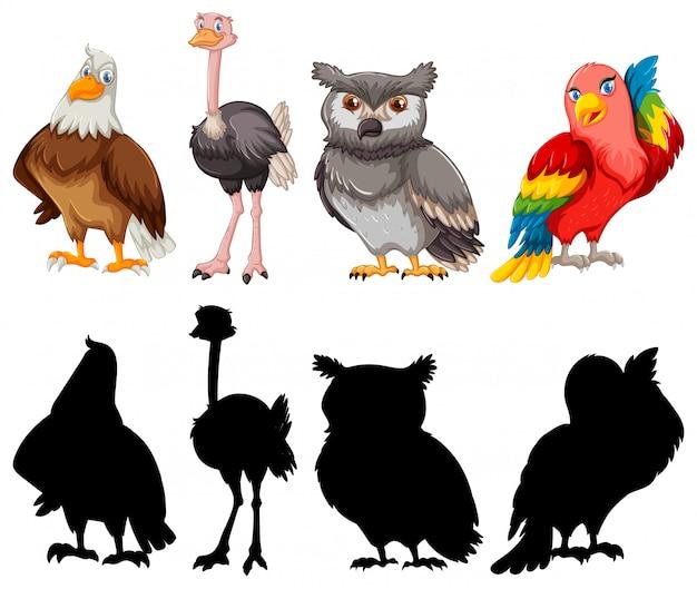 Silhouet en kleur overzicht vogel collectie Gratis Vector