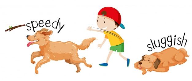 Snelheid en trage hond Gratis Vector