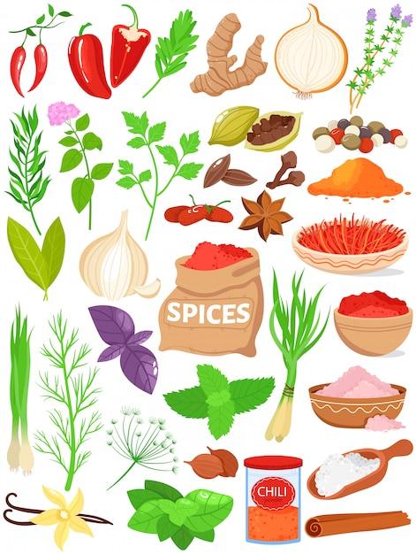 Specerijen kruiden vector illustratie set. Premium Vector