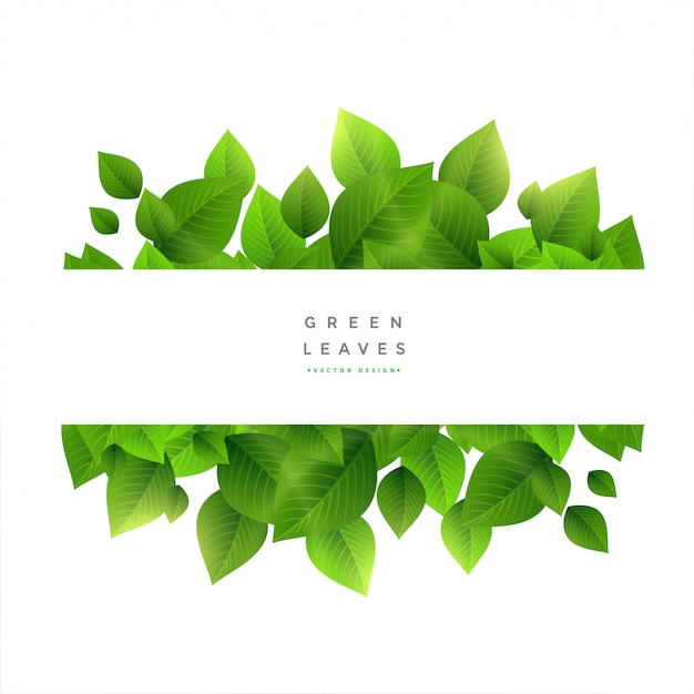 Stijlvolle groene bladeren met tekst ruimte Gratis Vector