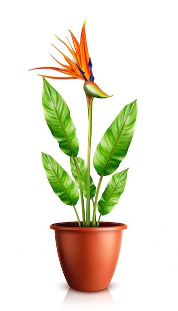 Strelitzia-reginae in bloempot Gratis Vector