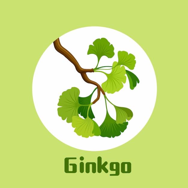 Tak van ginkgobiloba met bladerenillustratie Premium Vector