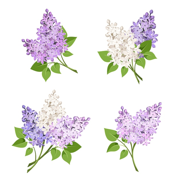 Takken van lila bloemen. illustratie. Premium Vector