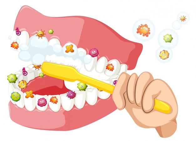 Tanden poetsen en bacteriën verwijderen Premium Vector