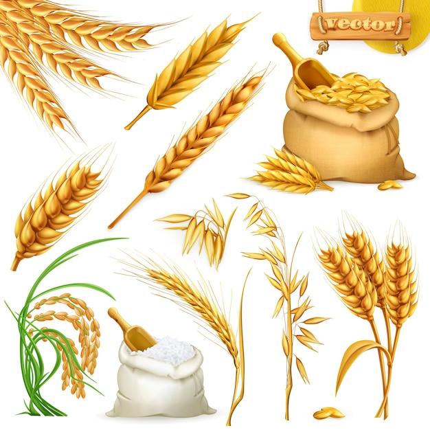 Tarwe, gerst, haver en rijst. granen 3d illustratie-elementen instellen Premium Vector
