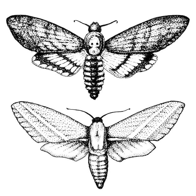 Tatoeage of boho t-shirt of scrapbooking. mystiek esoterisch symbool van vrijheid en reizen. vlinder of insect schets. entomologische collectie. gegraveerde hand getrokken in oude schets en vintage stijl Premium Vector