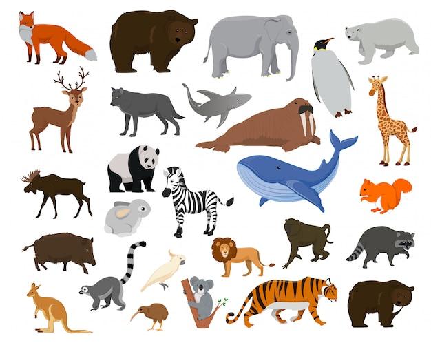 Tekenfilm dieren. grote collectie zeedieren, wilde dieren Premium Vector