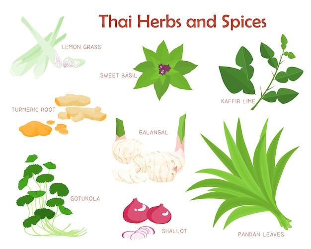 Thaise kruiden en specerijen kruiden Premium Vector