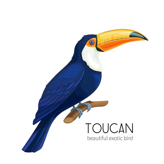 Toekanvogel Premium Vector