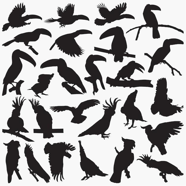 Toucan cockatoos silhouettes Premium Vector