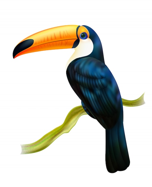 Toucan zittend op takje realistische afbeelding Gratis Vector