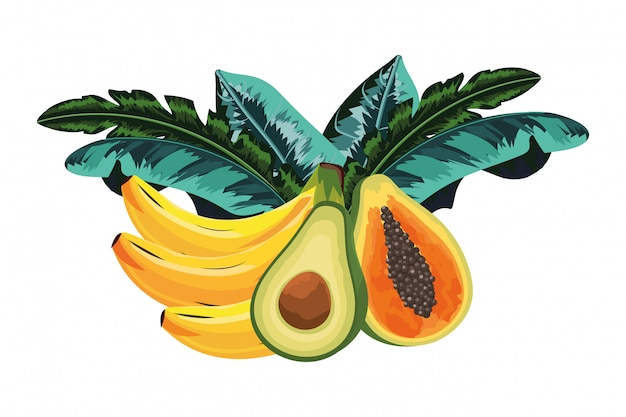 Tropisch fruitbeeldverhaal Premium Vector