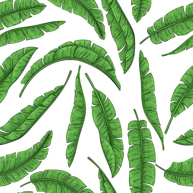 Tropisch palmbladen naadloos patroon, het blad van de wildernisbanaan Premium Vector