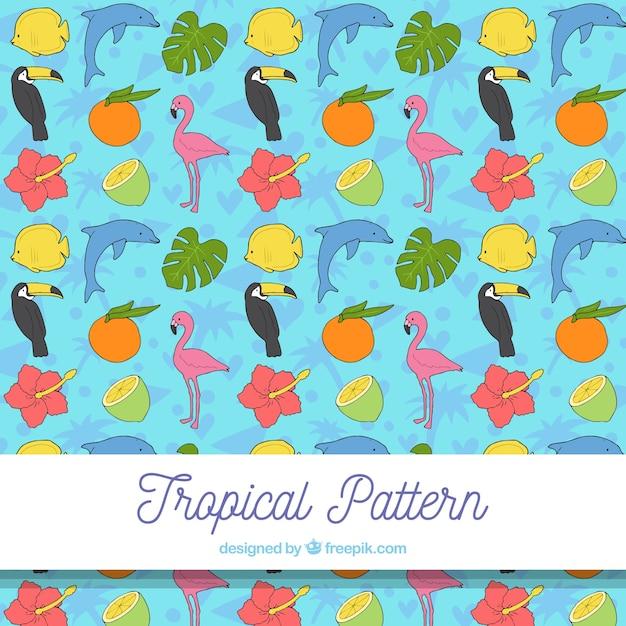 Tropisch patroon met vogels en vruchten Gratis Vector