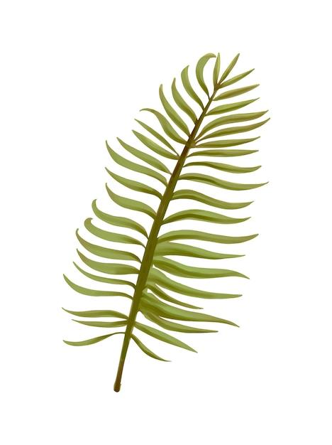 Tropische aroca palmbladillustratie Gratis Vector