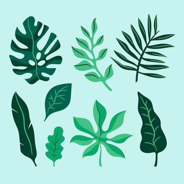Tropische bladcollectie Gratis Vector