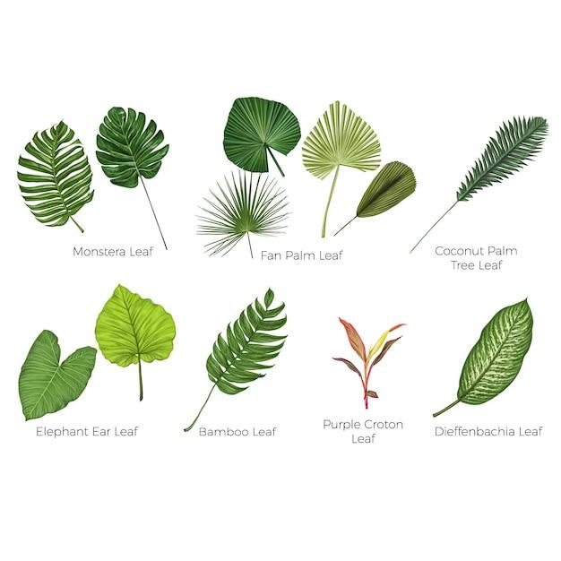 Tropische bladeren botanische vectorillustratie Premium Vector