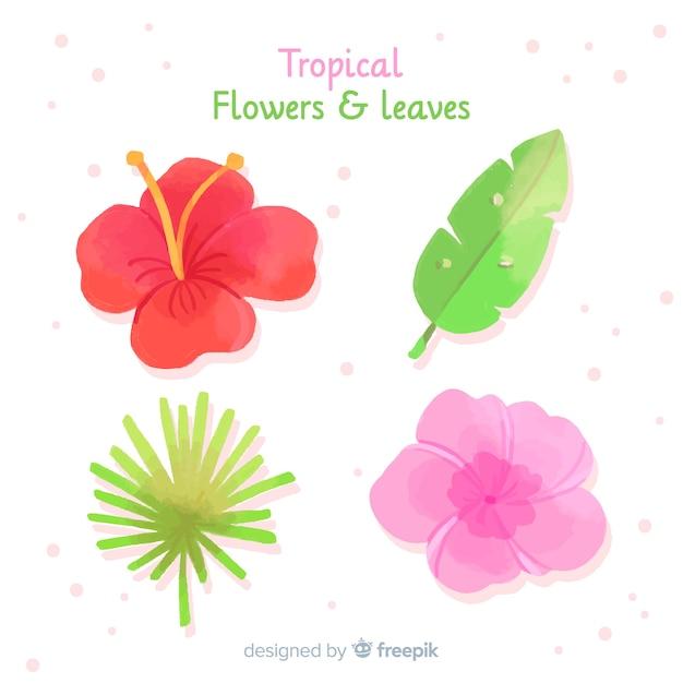 Tropische bladeren en bloemencollectio Gratis Vector