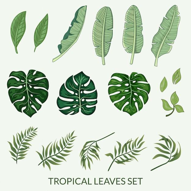 Tropische bladeren instellen vector Premium Vector