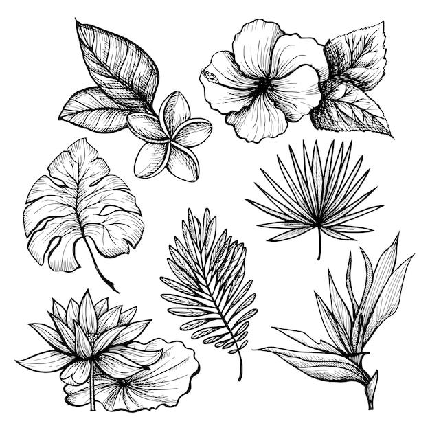 Tropische bladeren instellen Gratis Vector