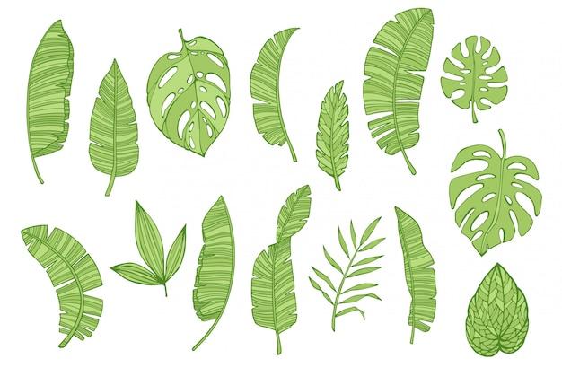 Tropische bladereninzameling, bloemen tropische geplaatste elementen Premium Vector