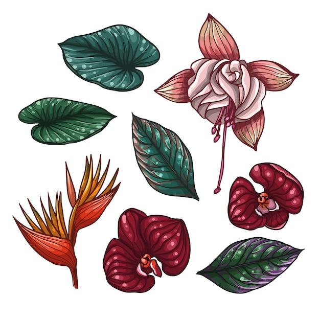 Tropische bloemen- en bladcollectie Gratis Vector