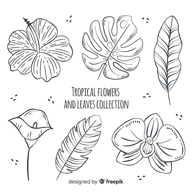 Tropische bloemen en bladeren Gratis Vector
