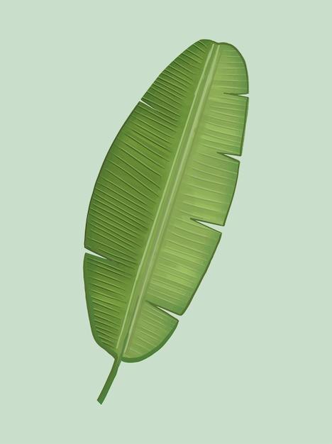 Tropische groene bananenblad illustratie Gratis Vector