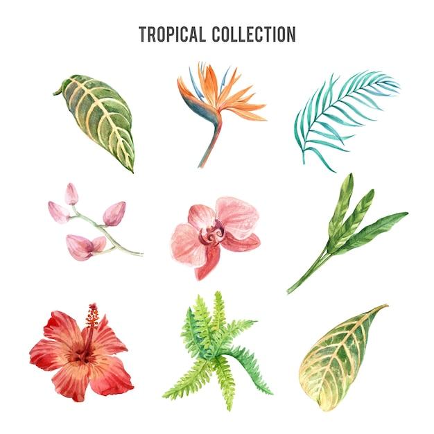 Tropische plant aquarel ontwerpelement met bloemen plant, illustratie set van botanische. Gratis Vector