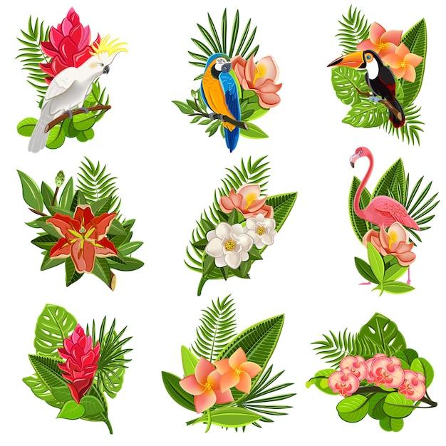 Tropische vogels en bloemen pictogrammen instellen Gratis Vector