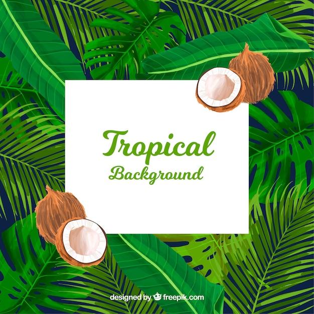 Tropische zomer achtergrond met planten en kokosnoten Gratis Vector