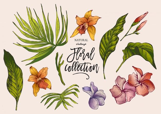 Tropische zomer vintage bloemencollectie Premium Vector