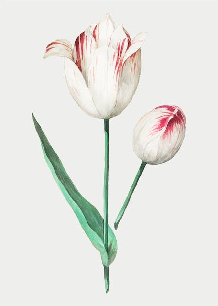Tulp in vintage stijl Gratis Vector